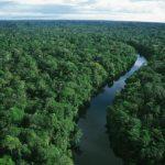 rainforest bird's view